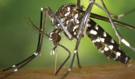 Zika Virus—Near Pandemic Proportions?
