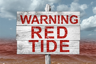 Be Prepared: There's No End in Sight for the Toxic Tide Sickening Floridians