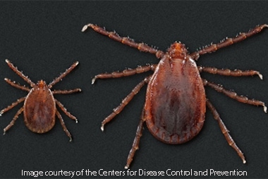 Disease-Carrying Asian Tick Species Makes Its Way to Eight U.S. States